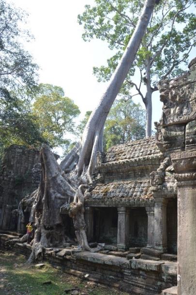 angkor (135)