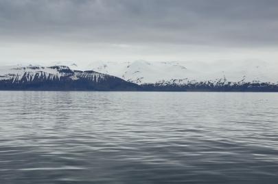 husavik-baleines (12)