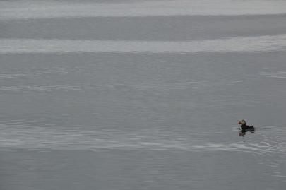 husavik-baleines (18)