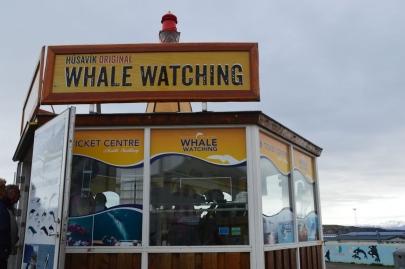 husavik-baleines (2)