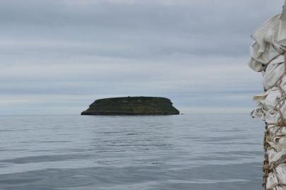husavik-baleines (23)