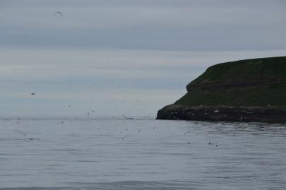 husavik-baleines (24)