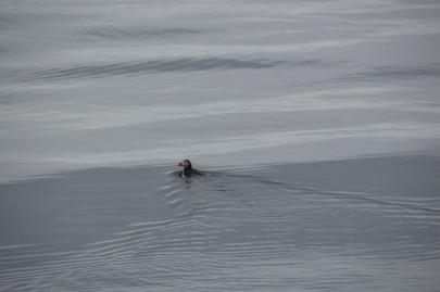 husavik-baleines (25)