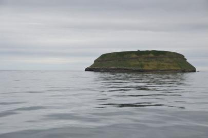 husavik-baleines (28)