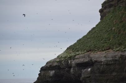 husavik-baleines (31)