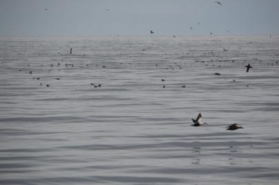 husavik-baleines (32)
