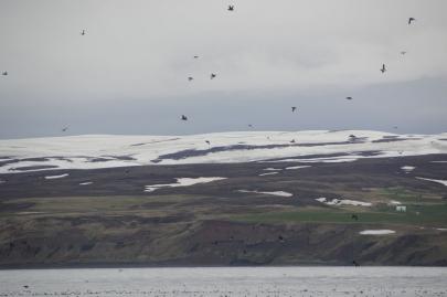 husavik-baleines (36)