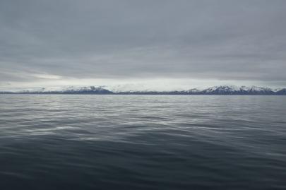 husavik-baleines (44)