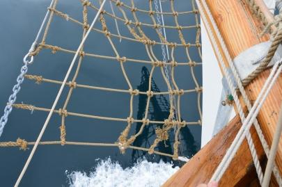husavik-baleines (47)