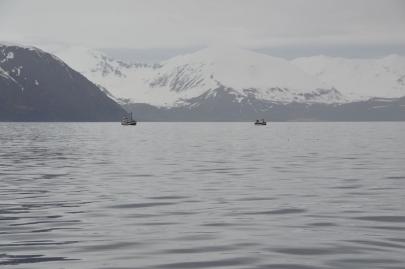 husavik-baleines (48)