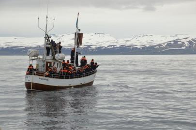 husavik-baleines (57)
