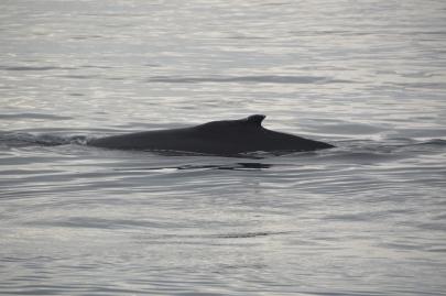 husavik-baleines (60)