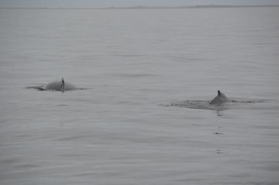 husavik-baleines (65)