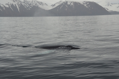 husavik-baleines (68)