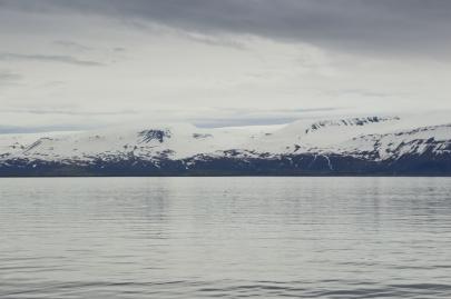 husavik-baleines (8)