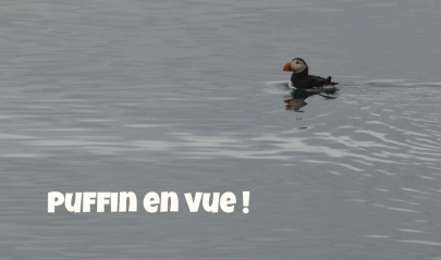 puffin5