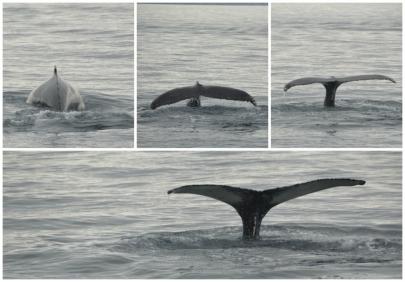whale6
