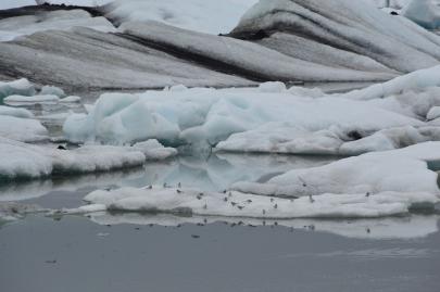 icebergs-islande (135)