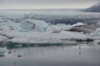 icebergs-islande (139)