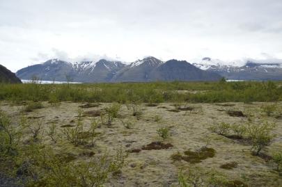 icebergs-islande (187)