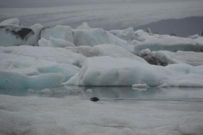 icebergs-islande (19)