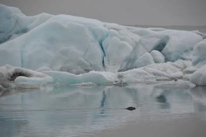 icebergs-islande (36)