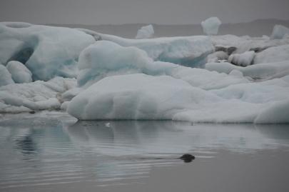 icebergs-islande (38)