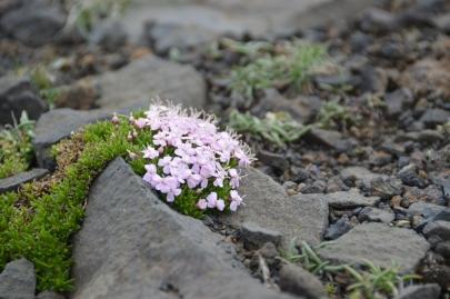 islande-roadtrip-sud (68)