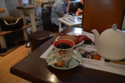 cafedeschats-paris (14)