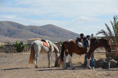 promenade-cheval-fuerteventura (10)
