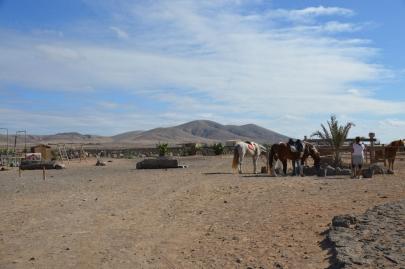 promenade-cheval-fuerteventura (11)