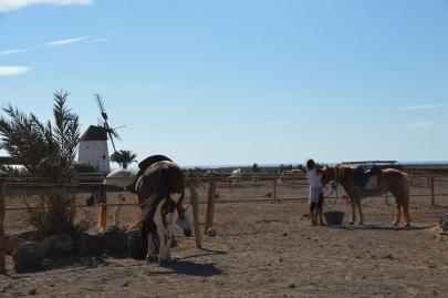 promenade-cheval-fuerteventura (15)
