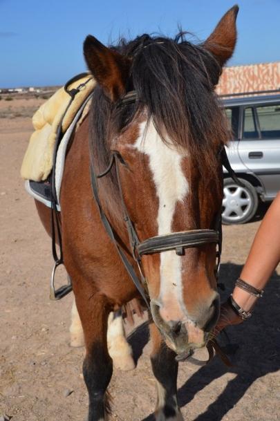 promenade-cheval-fuerteventura (18)