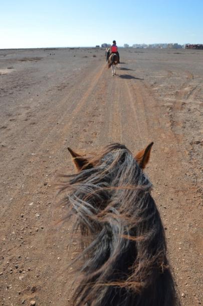 promenade-cheval-fuerteventura (19)