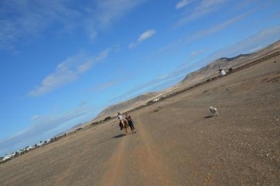 promenade-cheval-fuerteventura (22)