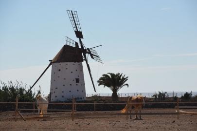 promenade-cheval-fuerteventura (3)