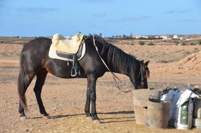 promenade-cheval-fuerteventura (74)