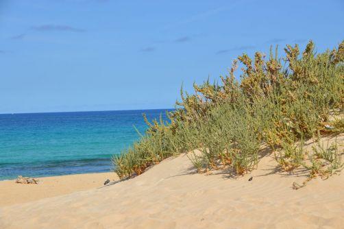 dunes-corralejo-fuerteventura (93)