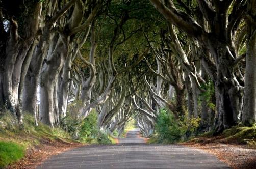 roadtrip-causeway-irlande (64)
