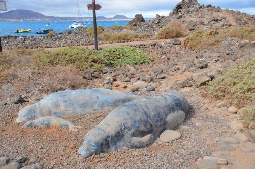 lobos-fuerteventura (236)