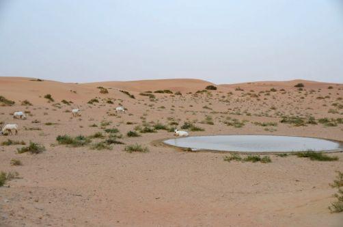 desert-de-dubai (16)