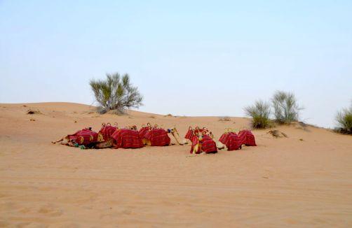 desert-de-dubai (3)