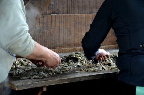 pecheurs-de-crevettes-a-cheval-coxyde (62)