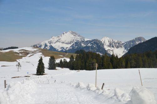 ayze-plateau-des-glières (39)
