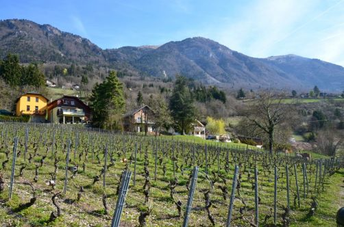 ayze-plateau-des-glières (8)