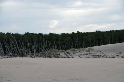 dunes-pologne (24)