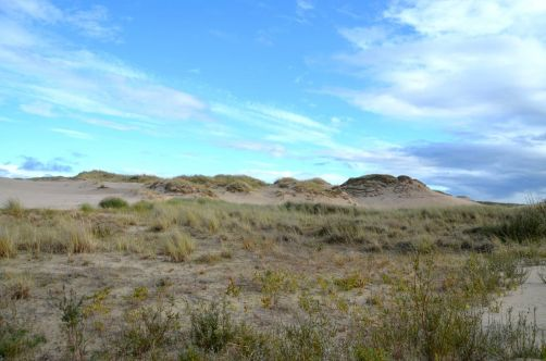dunes-pologne (40)