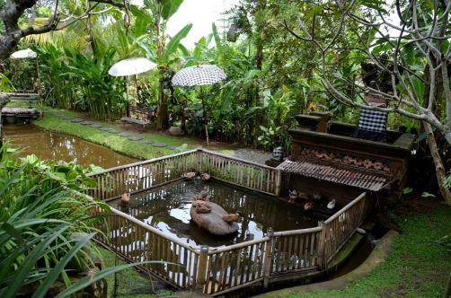 indonesie-bali-2016 (235)