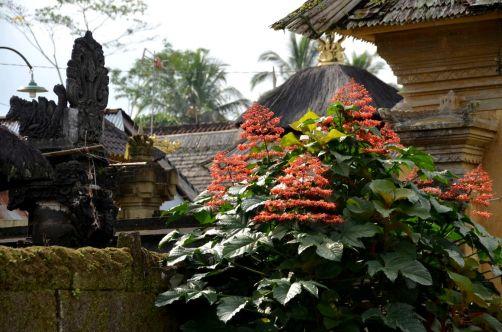 indonesie-bali-2016 (259)