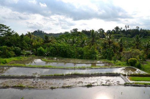 indonesie-bali-2016 (279)